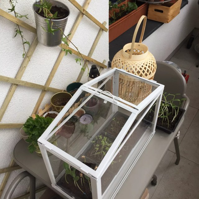 Mini greenhouse on urban balcony. Photo by Instagram user @katarinasido