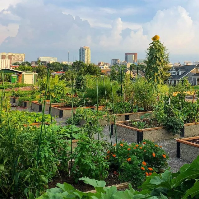 Urban rooftop community garden in Nashville. Photo by Instagram user @monicamwillis
