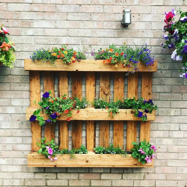 Pallet repurposed for vertical garden. Photo by Instagram user @nats_about_nature