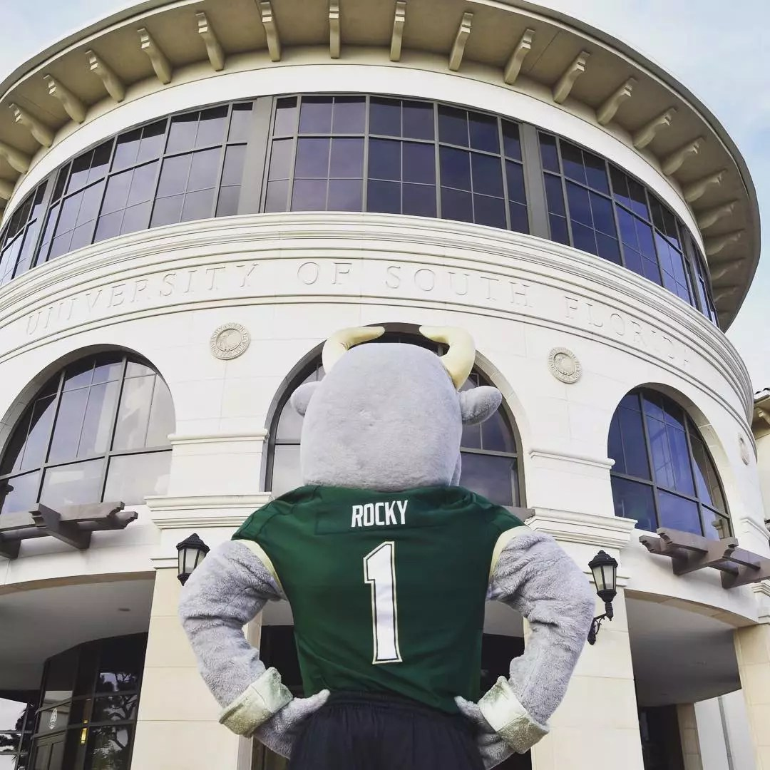 Rear view of bull mascot looks at campus building Photo by Instagram user @usfsm