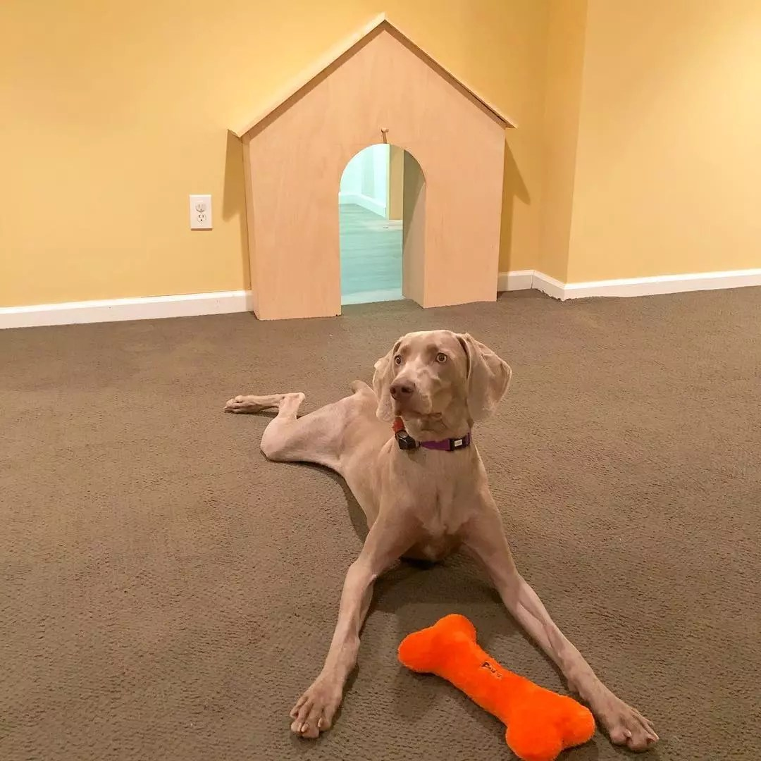 Dog Relaxing in Basement Home. Photo by Instagram user @shilohtheweim