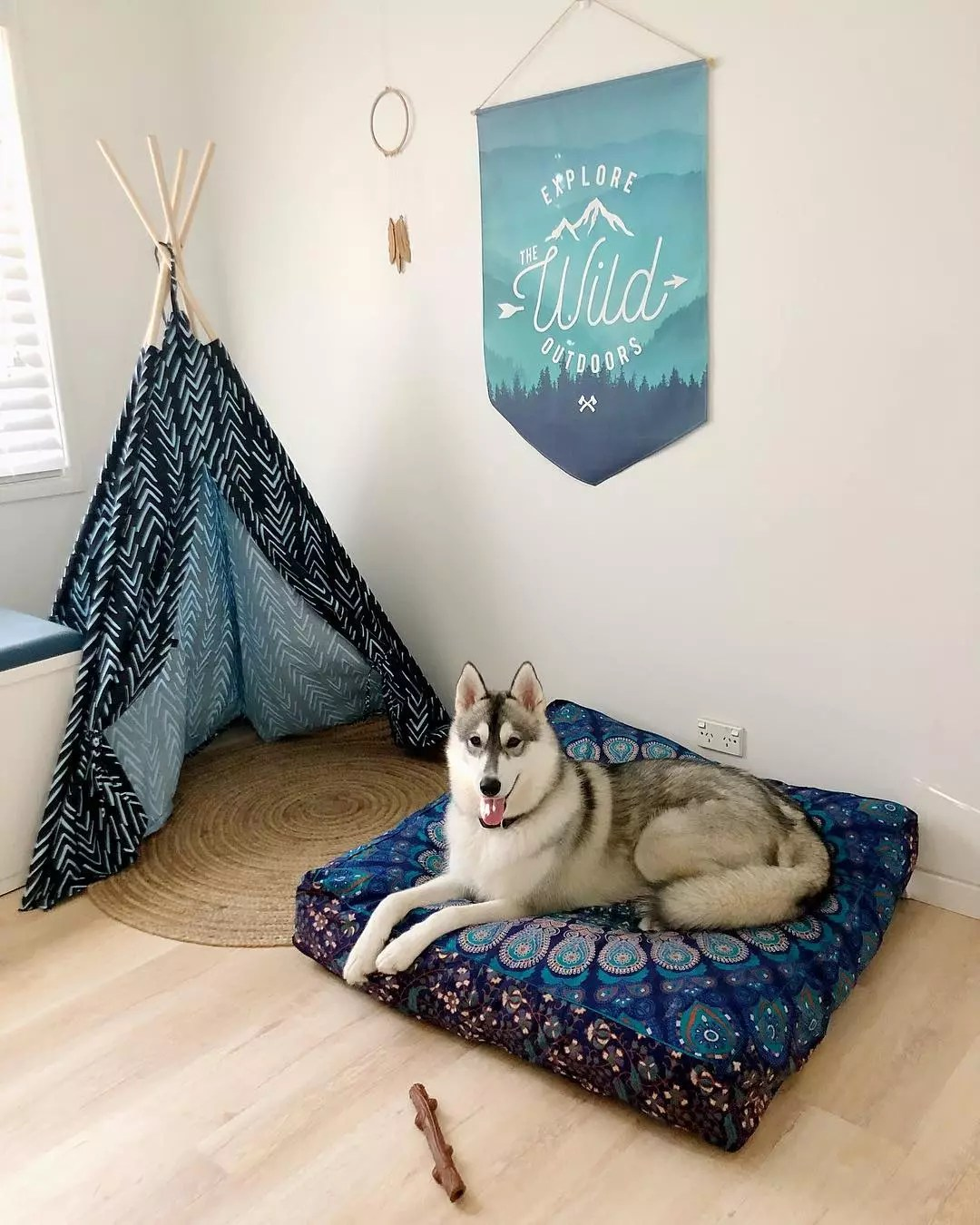 Dog Relaxing in Room with Tent and Bed. Photo by Instagram user @_life_of_nirvana_