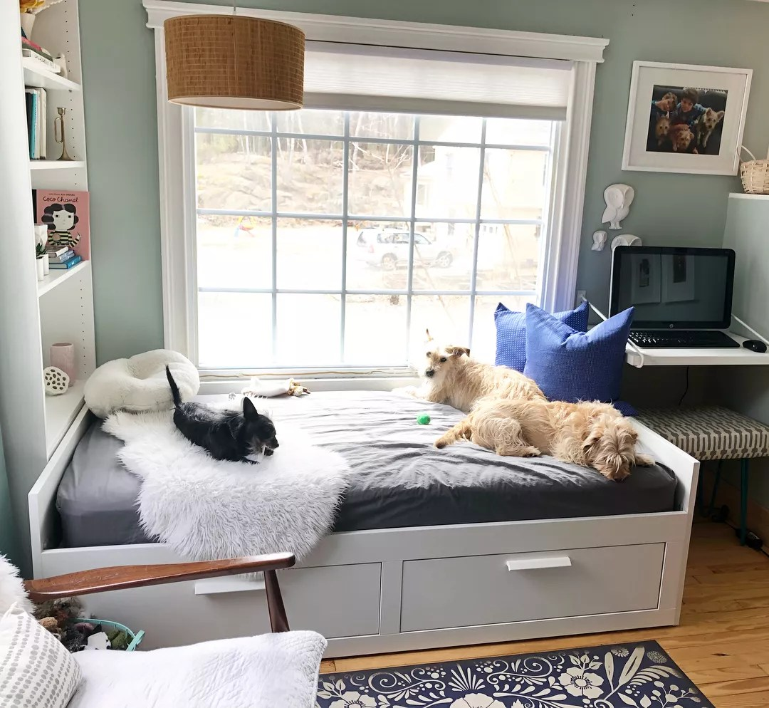 Dogs Laying on Bed in Home Office. Photo by Instagram user @chantalkyoung