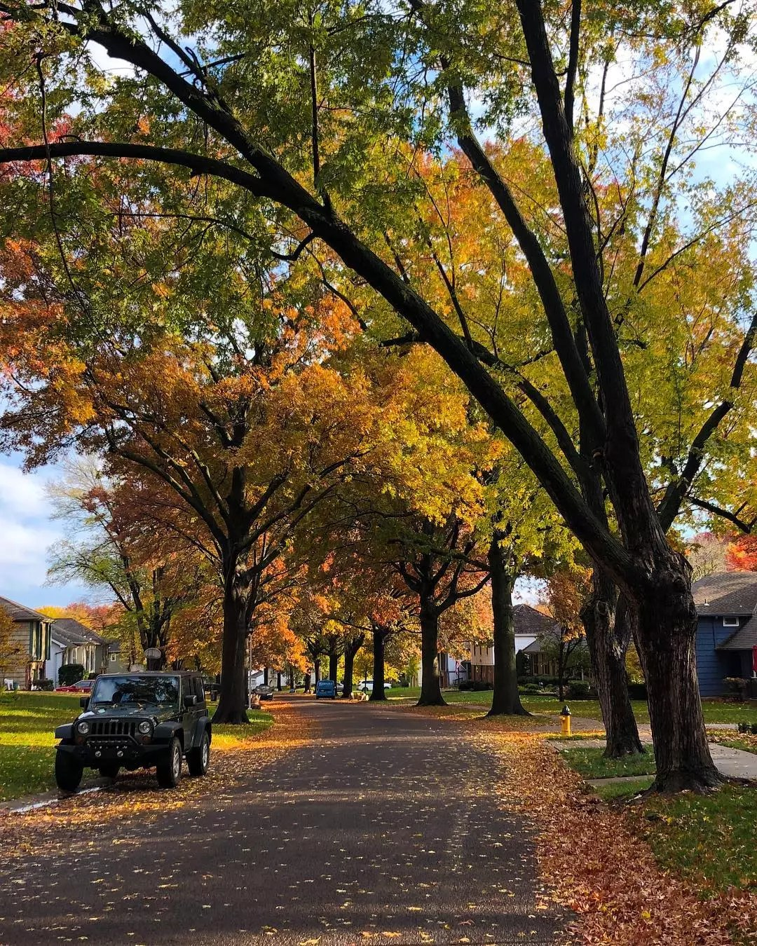Trees dropping leaves on street in Overland Park photo by Instagram user @katie_minion