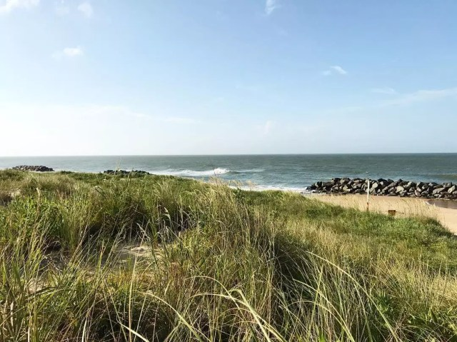 Grassy beach area on a sunny day at Fort Story Beach. Photo by Instagram user @brookebuccieri