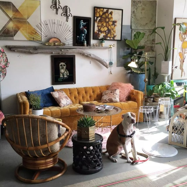 Room with dog in front of orange velvet couch and vintage paintings on wall. Photo via @gallivantinggirls