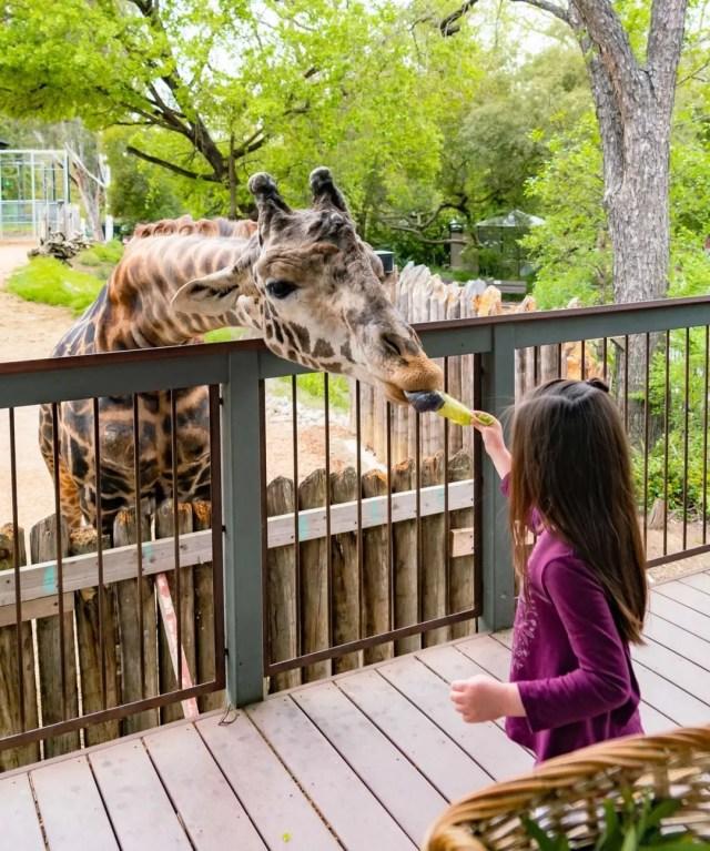 Little girl feeding giraffe. Photo by Instagram user @sacramentozoo