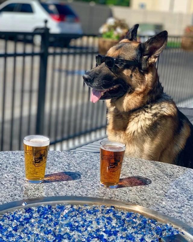 Dog sitting at table wearing sunglasses. Photo by Instagram user @wasserhundbrew