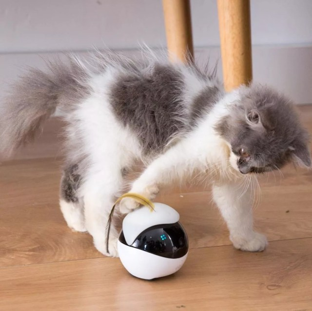 Gray and white kitty playing with ball. Photo by Instagram user @gadgets.4.g