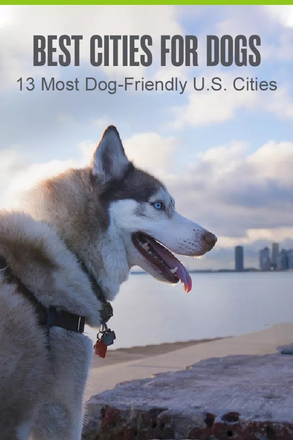 Pinterest Graphic: Best Cities for Dogs: 13 Most Dog-Friendly U.S. Cities