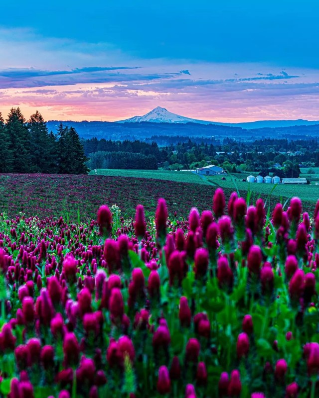 Photo of Flowers Ready to Bloom on a Hillside in Hillsboro, OR. Photo by Instagram user @pnw.adventures.82
