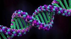 DNA header