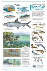 bonefish-poster