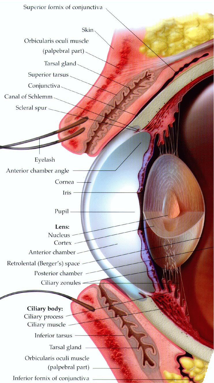 detailed eye diagram