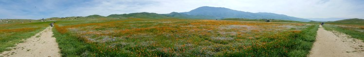 Field of Wildflowers at Tejon Ranch