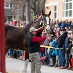 Clydesdales thrill crowds in West Annapolis
