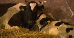 TROS Radar: Giving Milk a good Shake