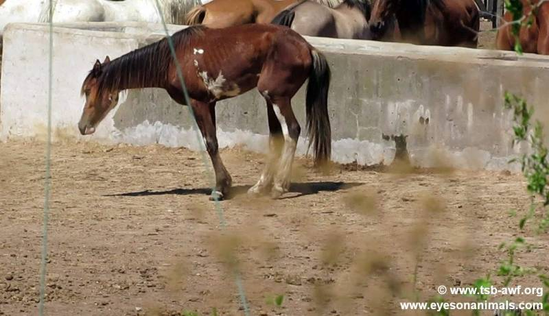 cruel reality behind imported horse meat 2