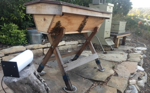 Eyesonhives viewing a top bar hive