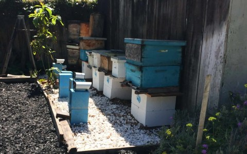 An apiary of beehives monitored by Eyesonhives cameras