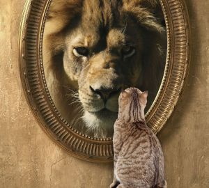 Cat looking into a mirror sees himself as a lion
