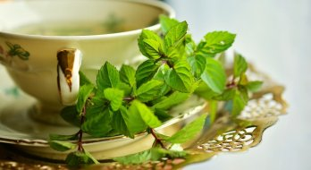 green mint leaves sitting on a saucer of a tea cup.