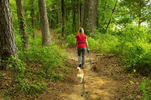 woman walking through a trail in the forest with 2 dogs