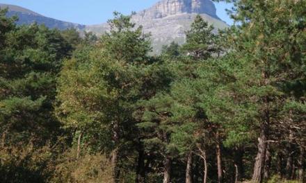 Sierra Salvada: conflictos entre alaveses, burgaleses y vizcaínos (V)