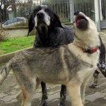 Daisy e Scemarella