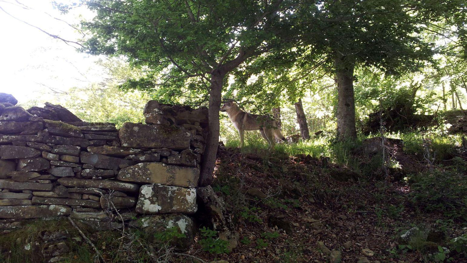 Ezechiele nel bosco a Campotosto7