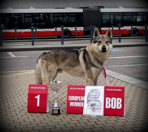 Campione Europeo 2014