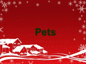 Gifts for Cats and Dogs