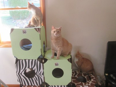 cathousedreamteampets 003