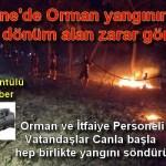 Ezine'de Orman yangınında 10 dönüm alan zarar gördü