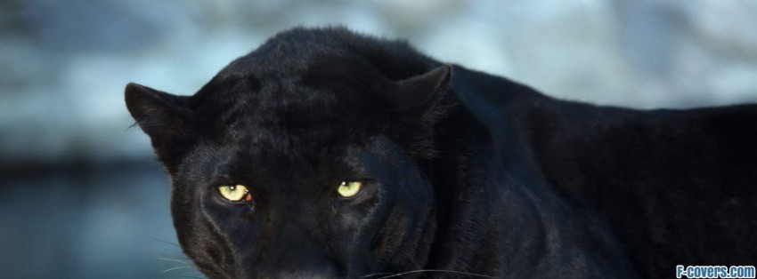 Panther Facebook Cover Timeline Photo Banner For Fb