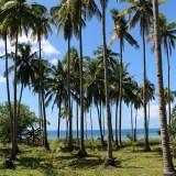 西洋人リタイア組の楽園「ポンソン島」(フィリピン・セブ)の行き方・楽しみ方