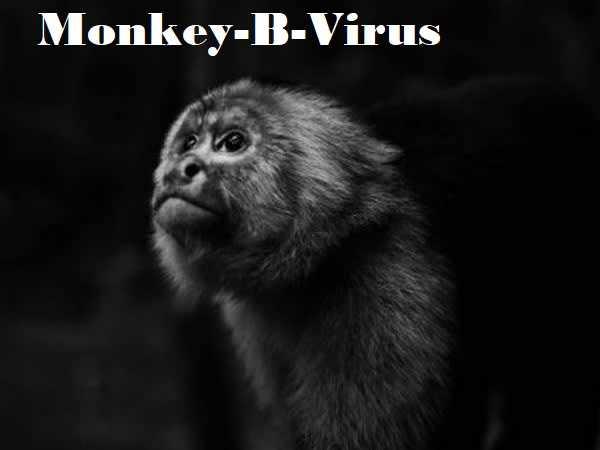 Monkey-B Virus