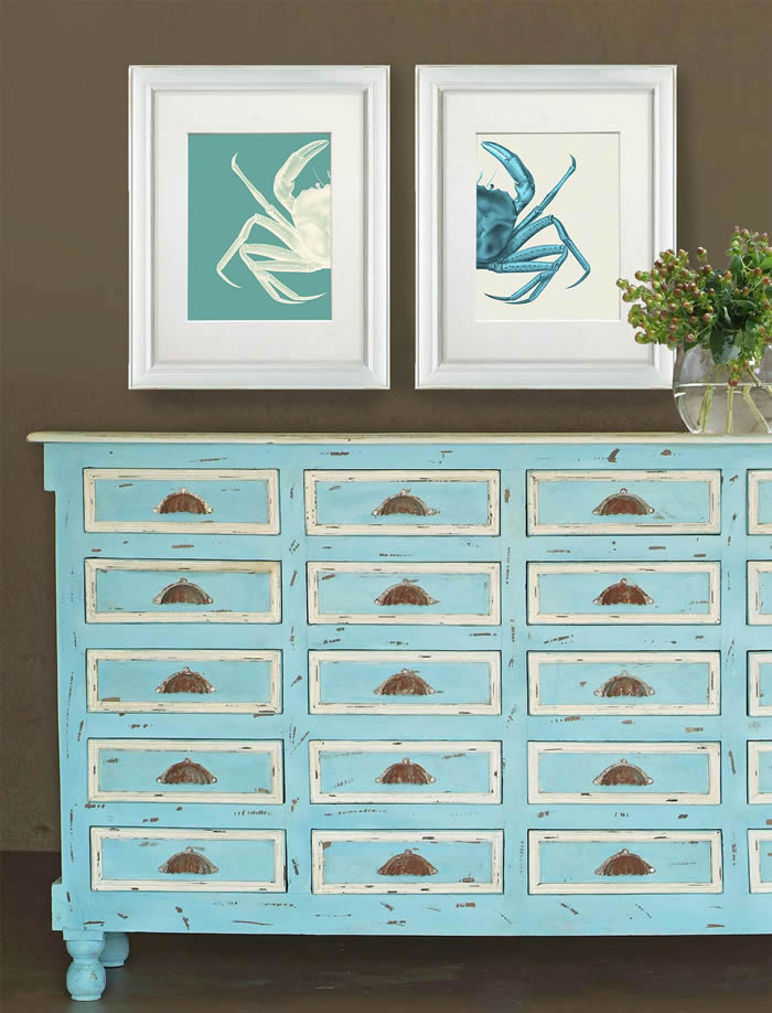 Contrasting Crab in Turquoise