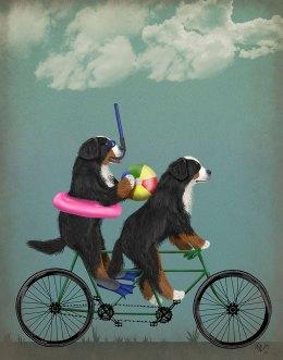 Bernese Mountain Dog Tandem
