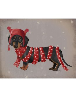 Dachshund and Long Scarf