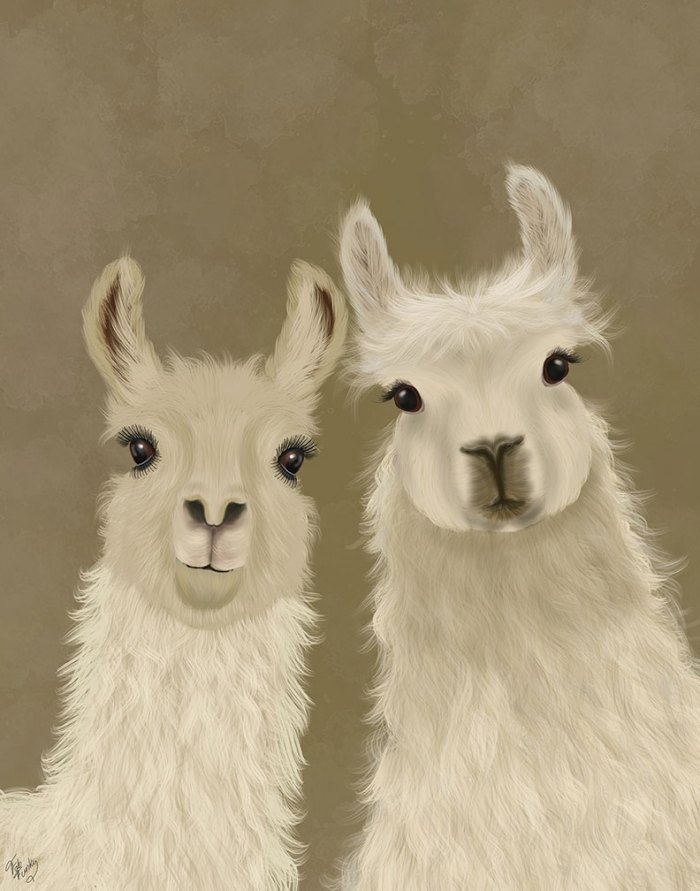 Llama Duo