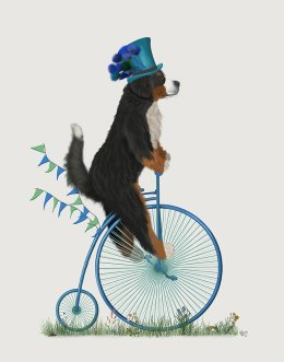 Bernese on Penny Farthing