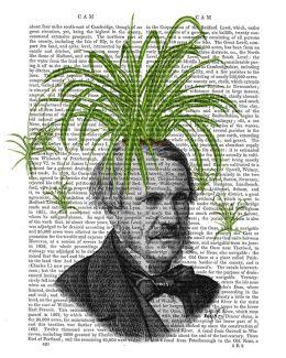 Spider Plant Head