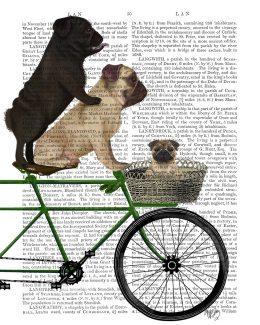Pugs on Bicycle