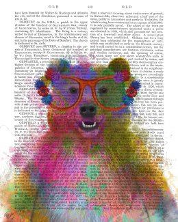 Bear Rainbow Splash 1