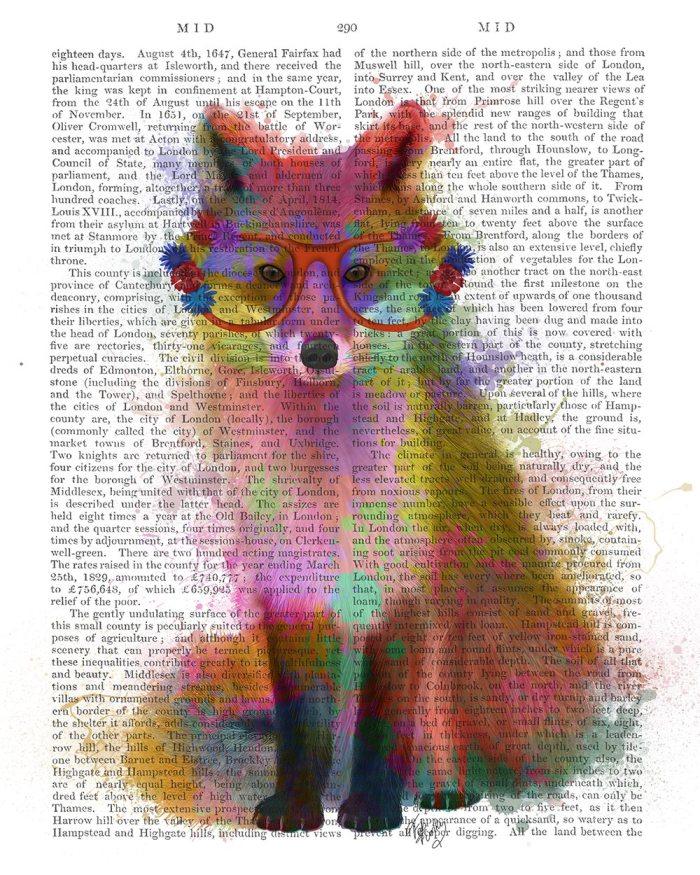 Fox Rainbow Splash 2