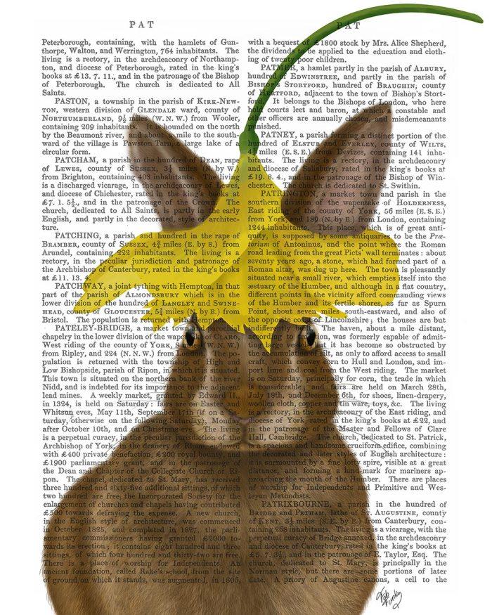 Daffodil Rabbit