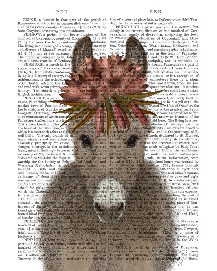 Donkey Bohemian 1