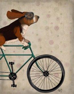 Basset Hound on Bicycle