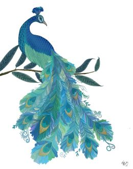Peacock with Doodle Tail on White